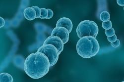 Стрептококк - возбудитель пневмонии у новорожденных