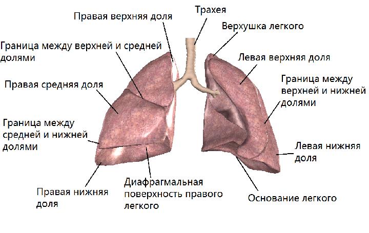 Схема легкого лечение